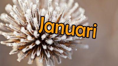 Agenda Januari